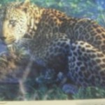 Random image: africatiger1-150x150