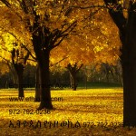 Random image: Ethiopis Fall Yellow Trees Ad
