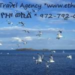 Random image: EthiopisBirdsAtSea