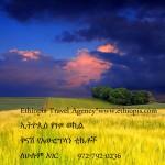 Random image: EthiopisFieldYellowFarmAd