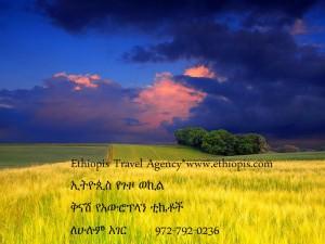 EthiopisFieldYellowFarmAd
