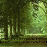 Random image: EthiopisForestAd2