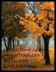 EthiopisForestRdAd