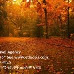 Random image: EthiopisTravelDeepForest