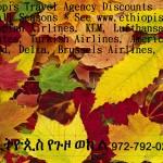 Random image: ethiopisFallLeavesAd1