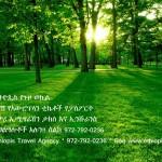 Random image: ethiopisForest6