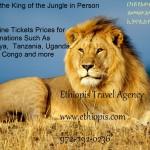 Random image: lionAfricaAd