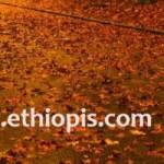 Random image: cropped-EthiopisTravelDeepForest.jpg