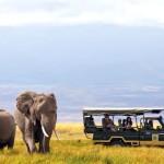 Random image: african-safaris_1024x1024
