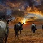 Random image: beautiful_africa_photos03