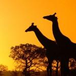 Random image: beautiful_africa_photos26