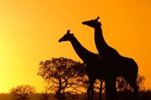 beautiful_africa_photos26