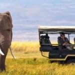Random image: cropped-african-safaris_1024x1024.jpg