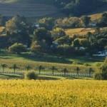 Random image: cropped-franschhoek-vineyards-south-africa-GettyImages-200157099-001.jpg