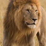 Random image: cropped-how-prepare-african-safari-1478291054.jpg