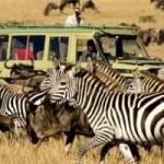 Random image: cropped-migration-serengeti-safari.jpg