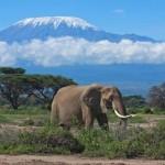 Random image: tanzania_kilimanjaro_tour_elephant_and_mt._kilimanjaro_-_globeinter_somak_planet_tours_bobby_tours